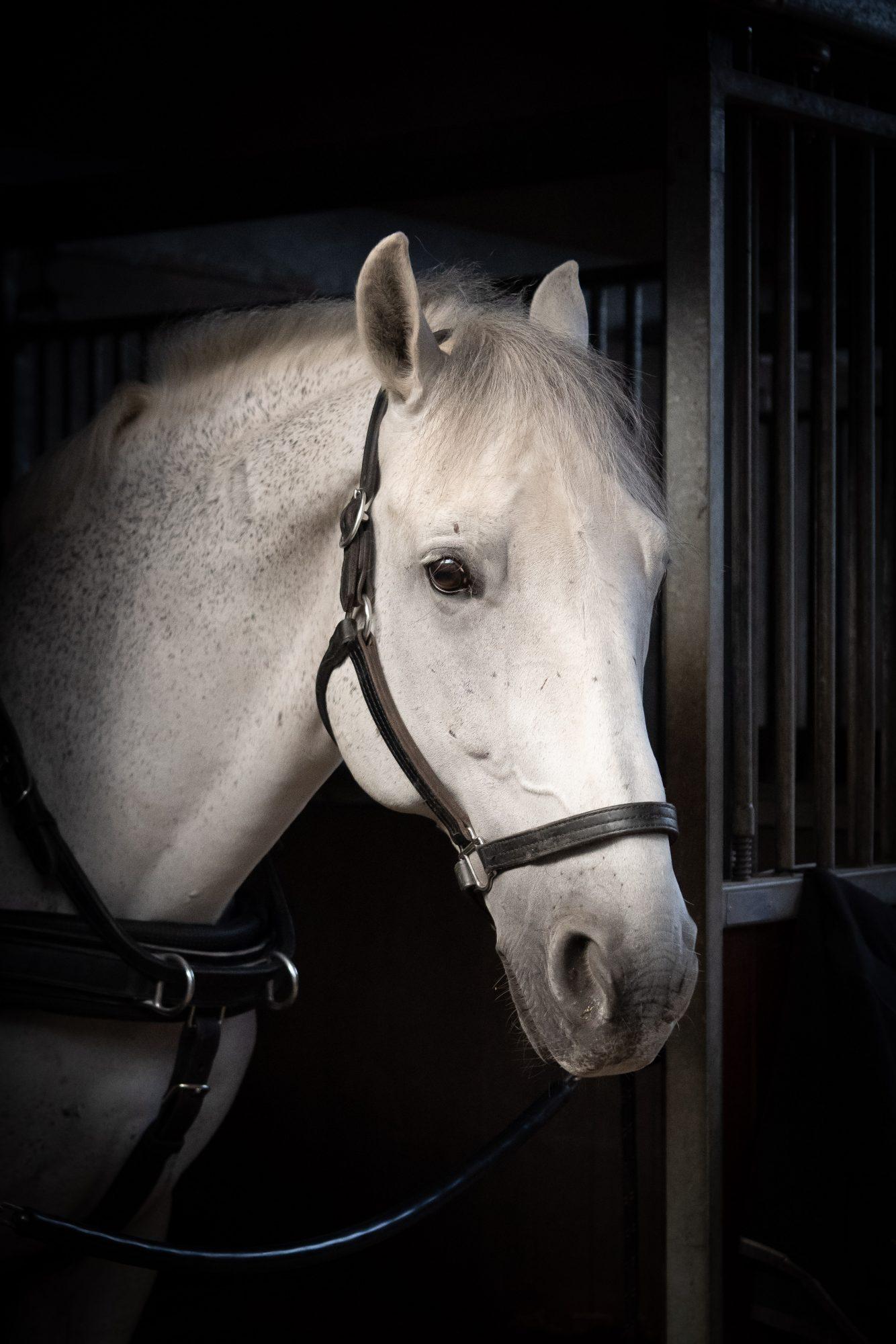 Gerard Oltmans | Liefde voor paarden